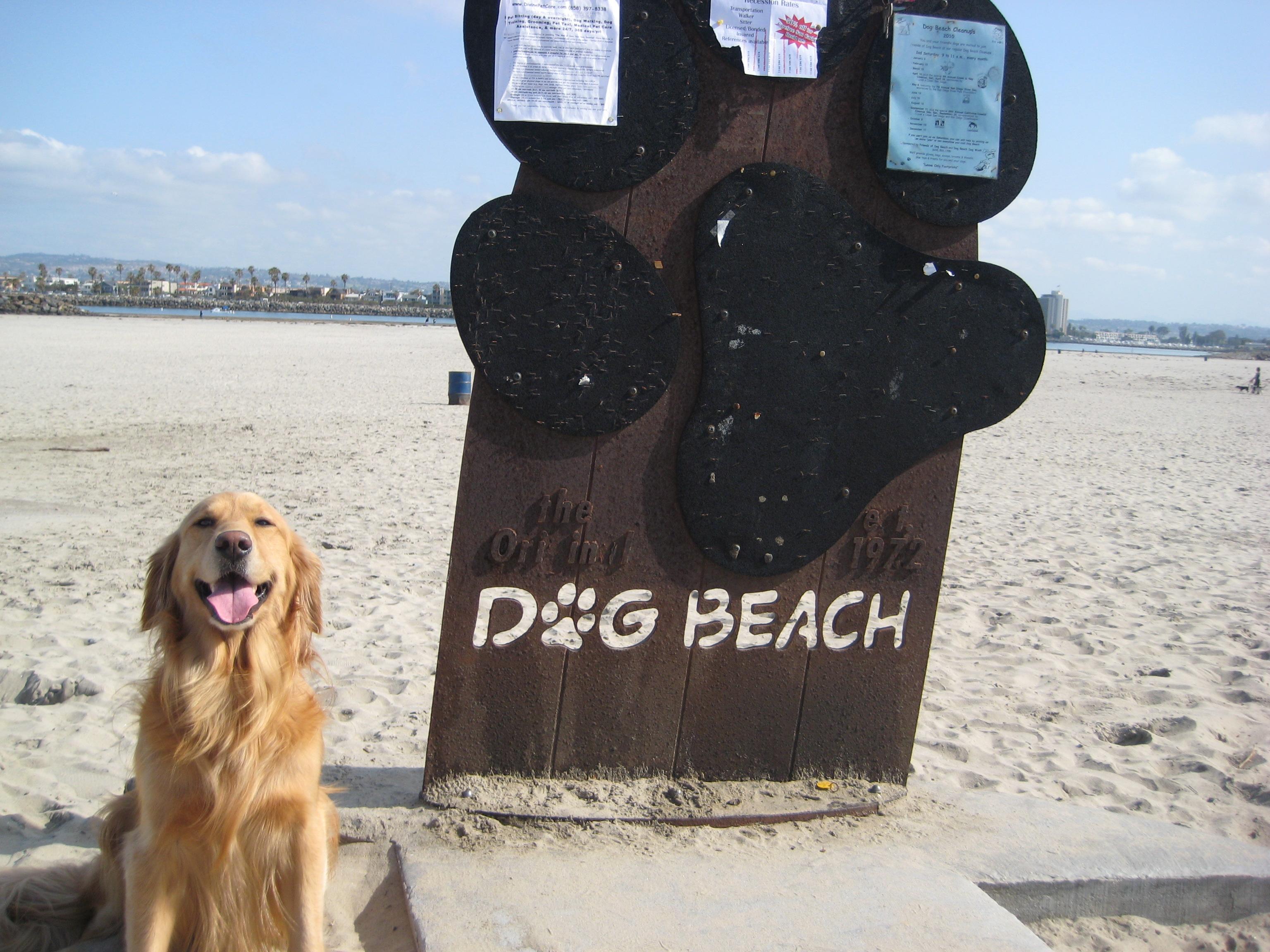 dog friendly beaches san diego